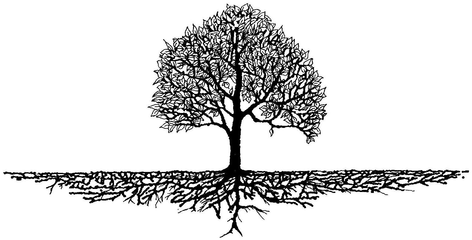 Your Tartan's Roots Run Deep